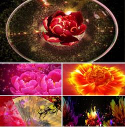 唯美牡丹花绽放 舞台LED大屏幕背景视频(无声)